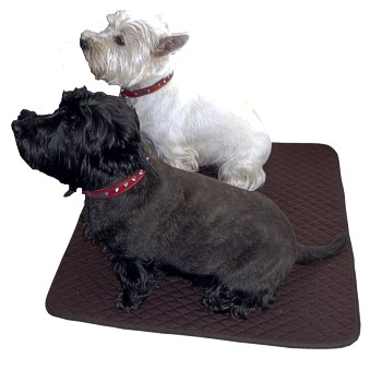 dbed-dog-bed-350